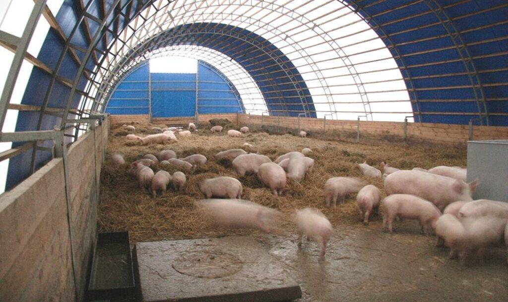 Ангар для свинофермы