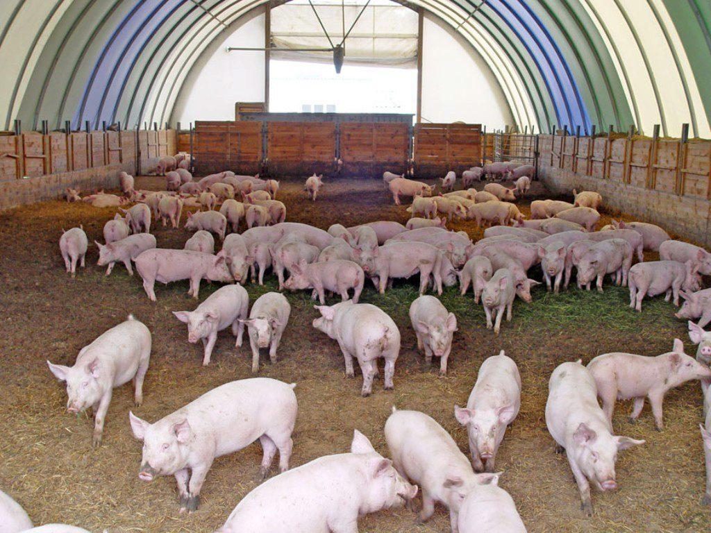 Ангары под свинарники и свинофермы